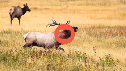 video de chasse