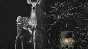 meilleure camera de chasse infrarouge